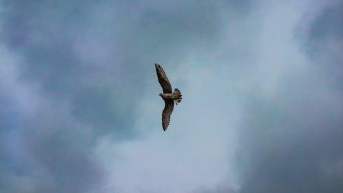 구름, 날으는, 바닥, 새의 무료 스톡 사진