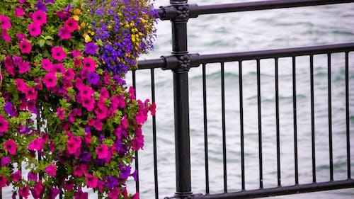 꽃, 다채로운 꽃, 물, 바다의 무료 스톡 사진