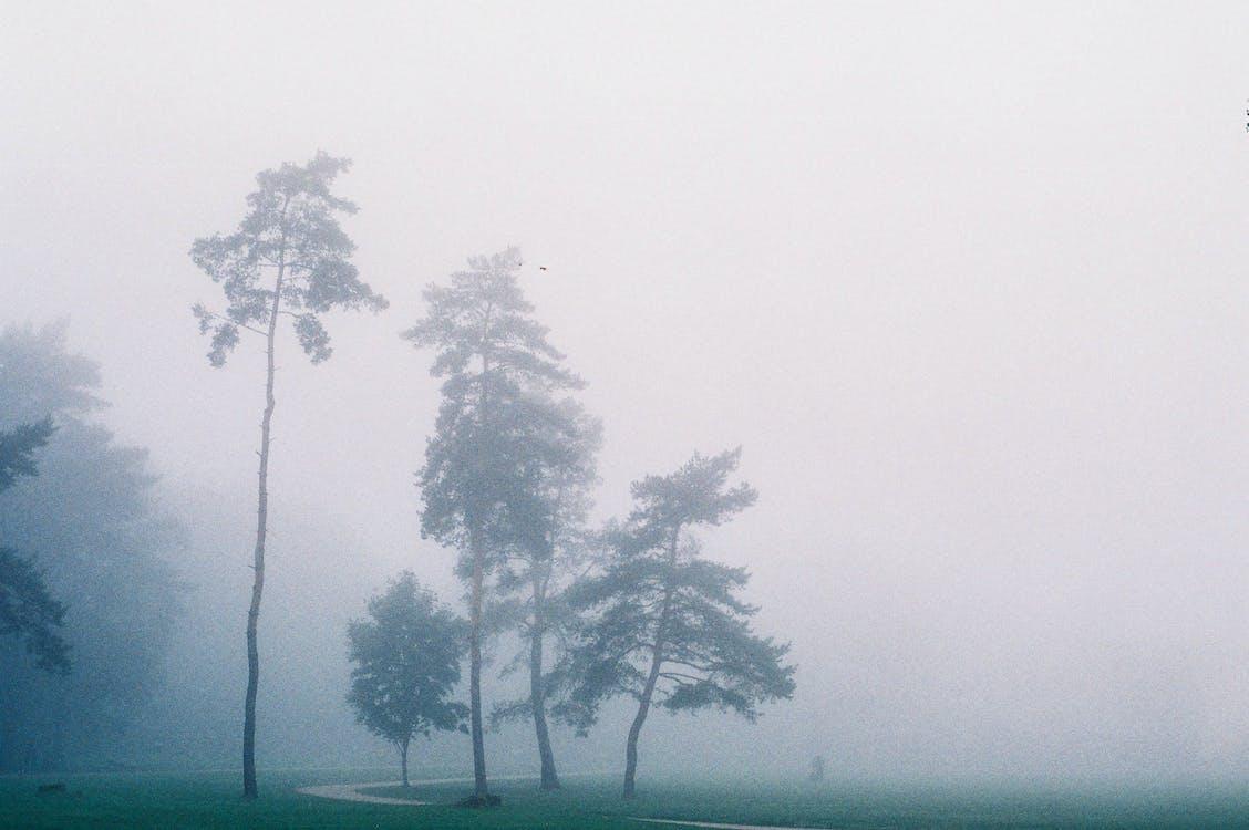 감기, 나무, 박무