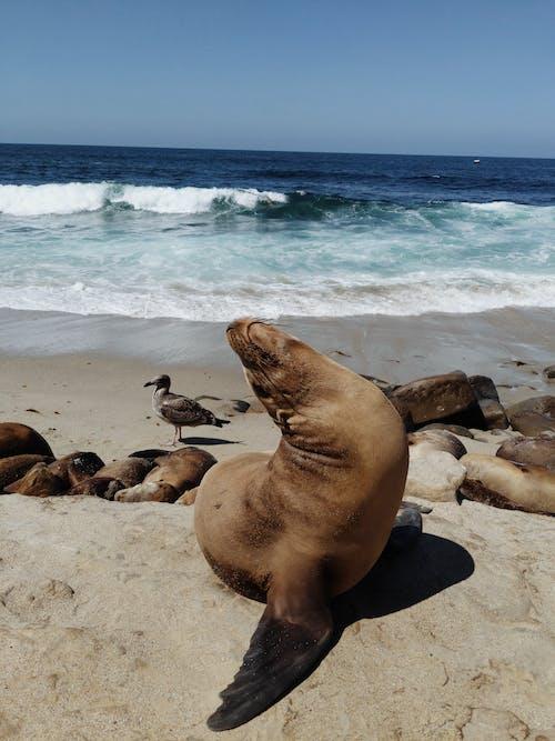動物, 動物攝影, 可愛, 夏天 的 免費圖庫相片
