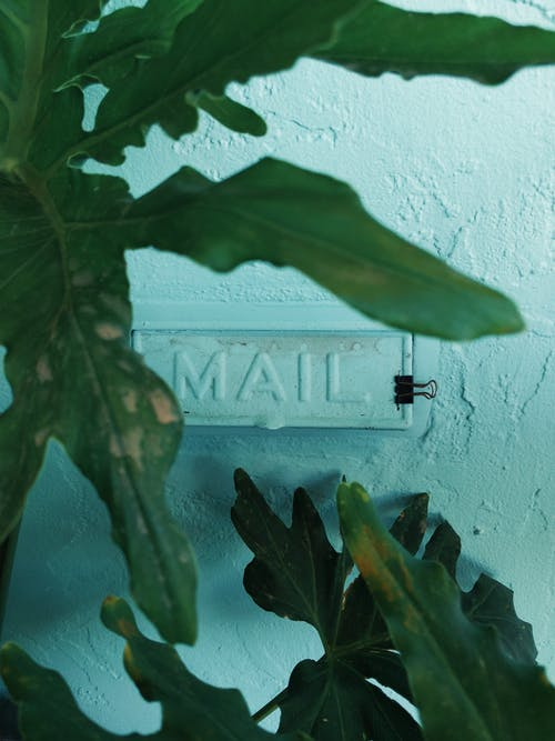 園林植物, 場景, 增長, 專注 的 免費圖庫相片