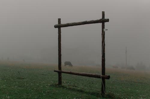冷, 原本, 壞心情, 天性 的 免费素材照片