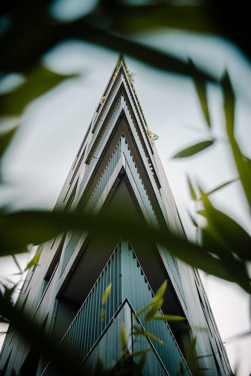 건축, 로우앵글 샷, 원근감, 잔디의 무료 스톡 사진