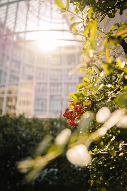 Foto stok gratis Daun-daun, kebun, kilang