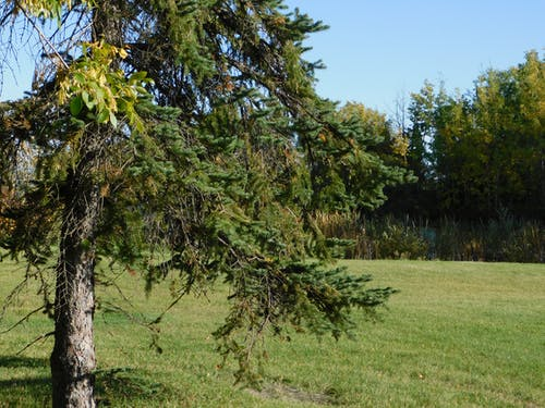 Fotobanka sbezplatnými fotkami na tému stromy