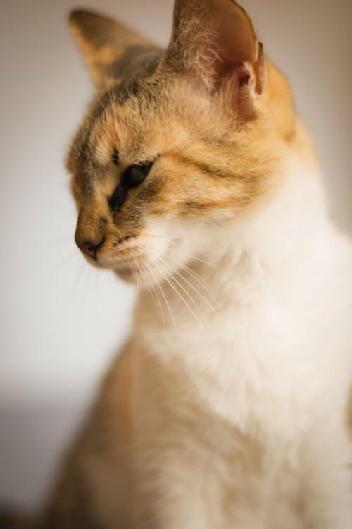 Δωρεάν στοκ φωτογραφιών με 50mm, catlife, Γάτα, κατοικίδιο