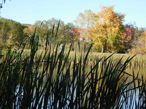 Fotobanka sbezplatnými fotkami na tému prírodný park