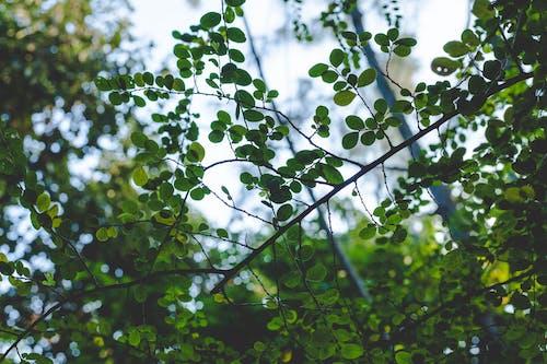 Ảnh lưu trữ miễn phí về cây, những chiếc lá xanh