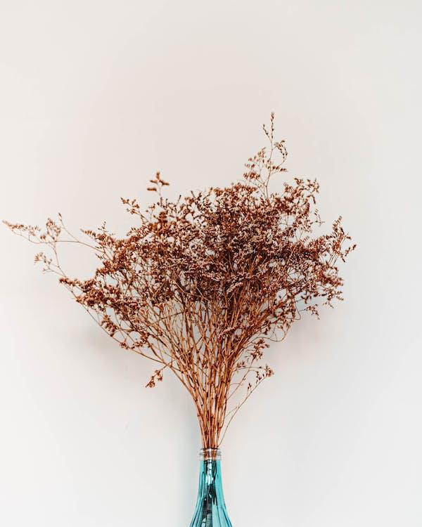 anlegg, blomst, blomstervase