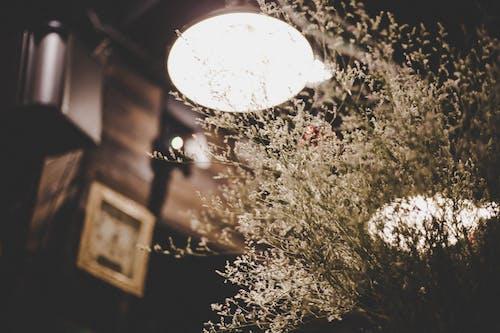 말린 꽃, 전구, 커피숍의 무료 스톡 사진