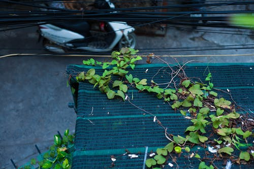 Darmowe zdjęcie z galerii z liście, ulica, wietnam
