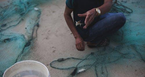 Foto profissional grátis de peixe, vida na praia