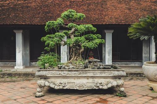 Darmowe zdjęcie z galerii z architektura, architektura azjatycka, beton, bonsai