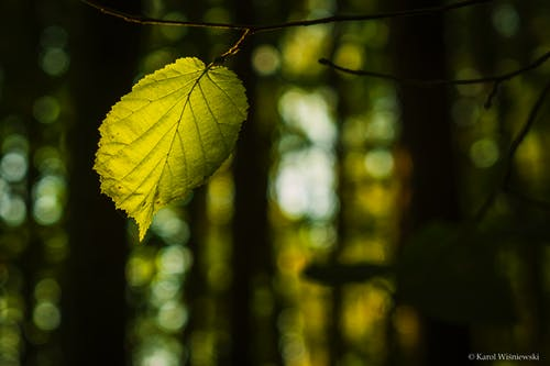Free stock photo of green leaf, nature