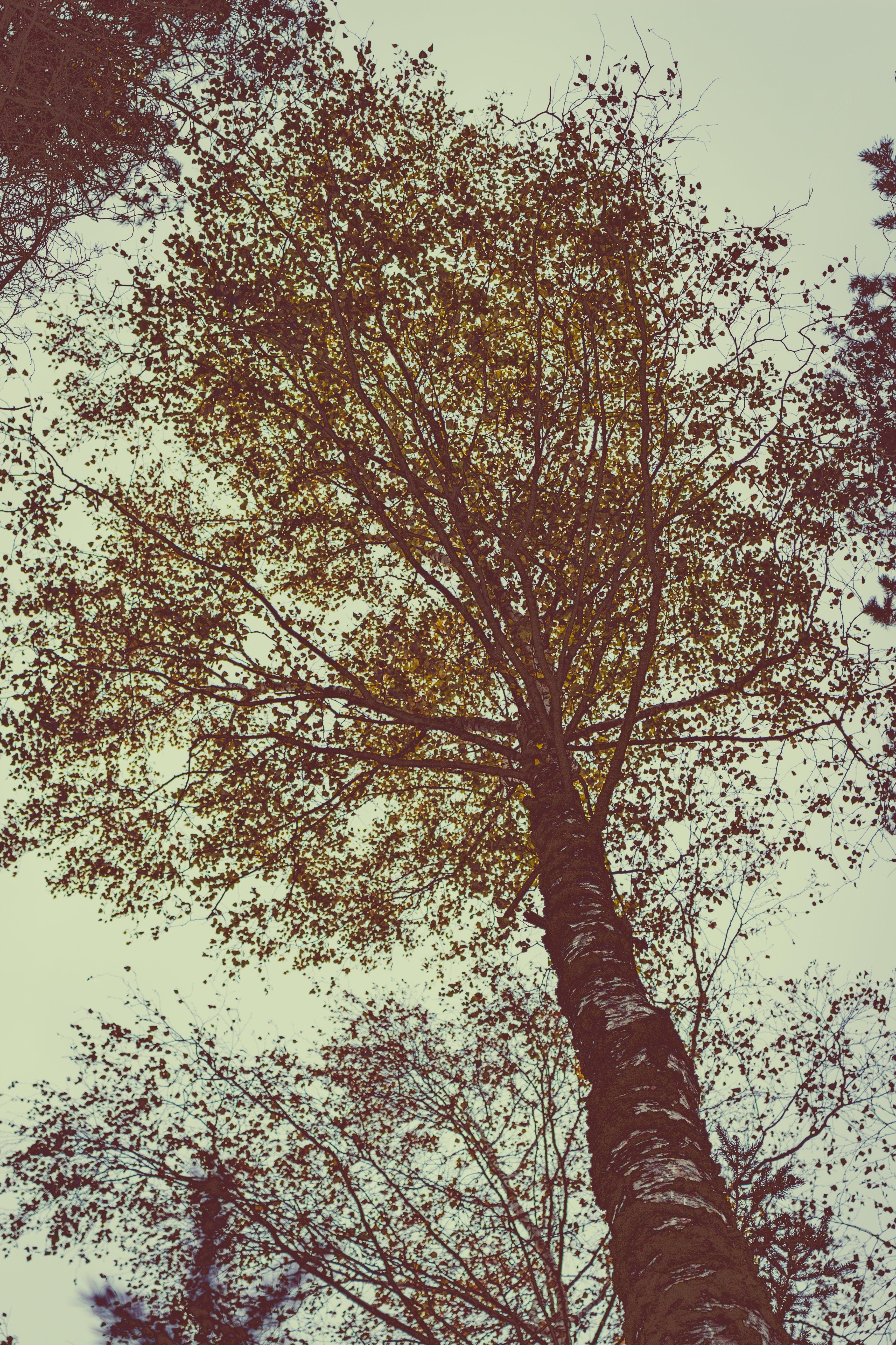 Foto stok gratis alam, batang pohon, cabang, fotografi sudut rendah