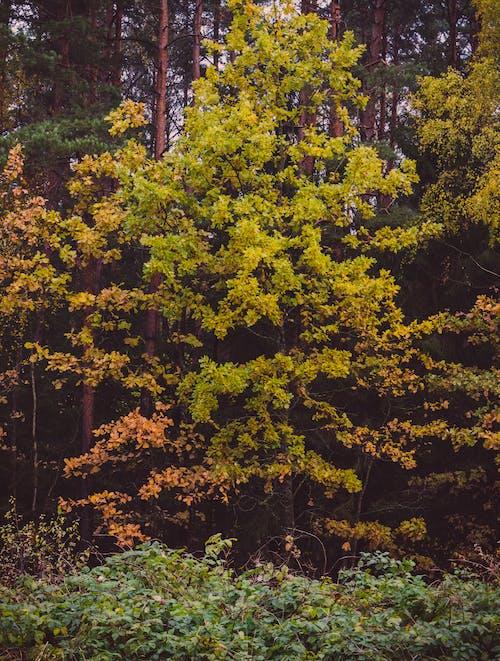 Kostenloses Stock Foto zu bäume, blätter, draußen, laub