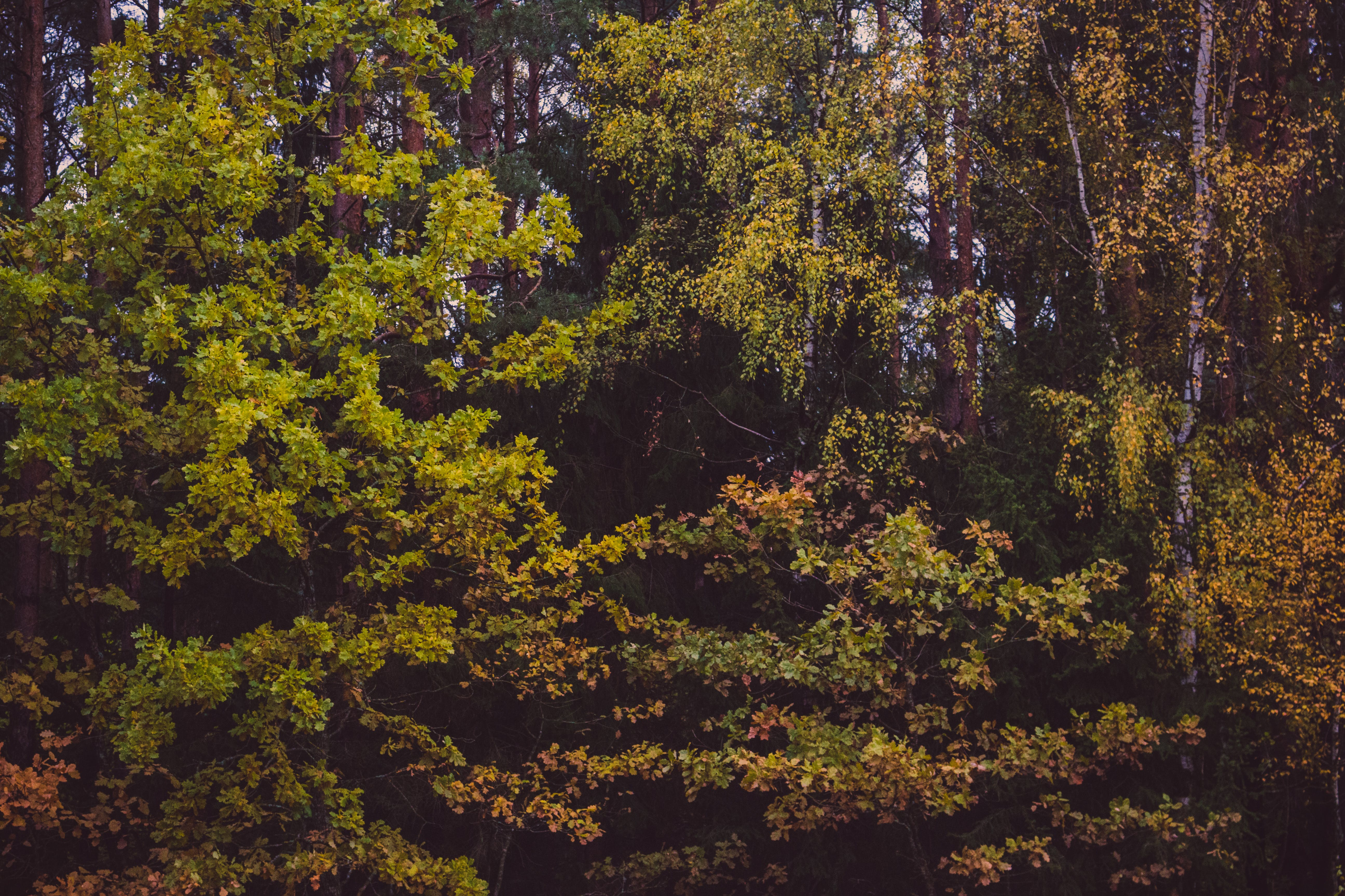 Free stock photo of nature, forest, trees, leaves