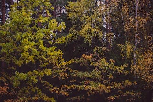 Ingyenes stockfotó erdő, fák, gyárak, környezet témában