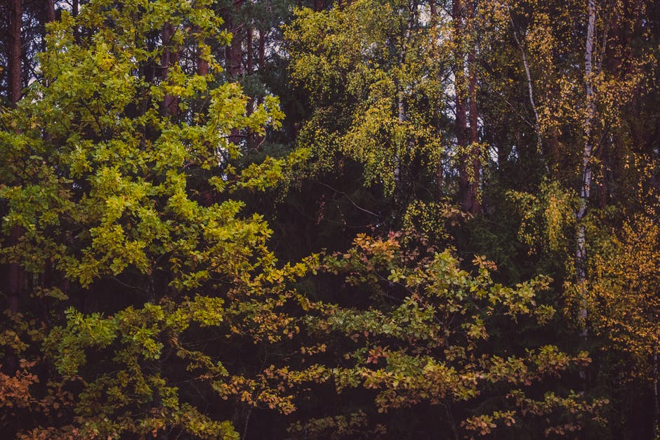 New free stock photo of nature, forest, trees