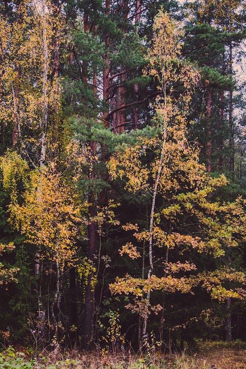 Ảnh lưu trữ miễn phí về cây, môi trường, rừng, tán lá