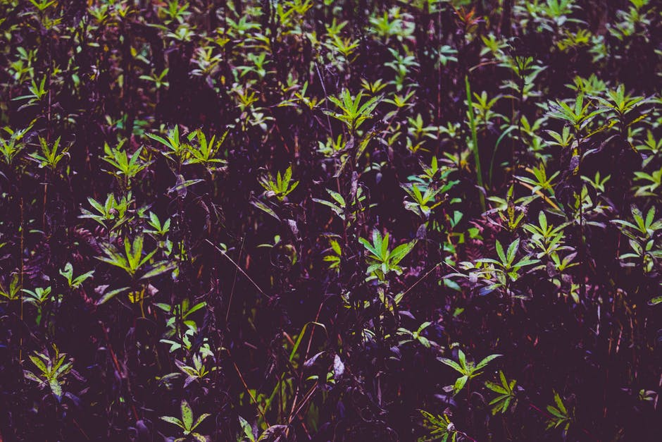 New free stock photo of leaves, plants, growth