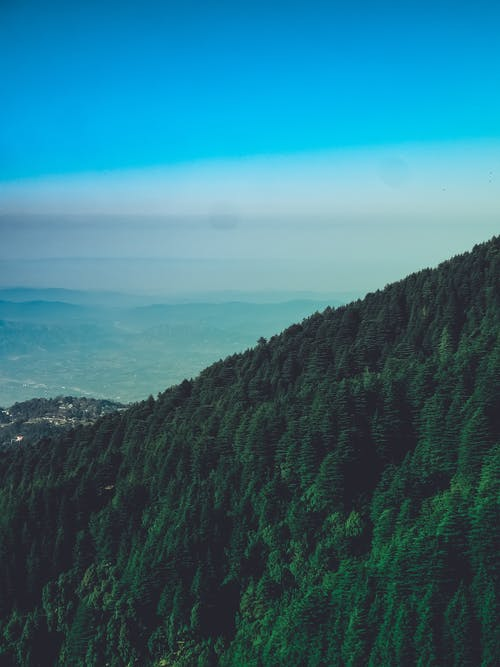 Green Trees On A Mountain