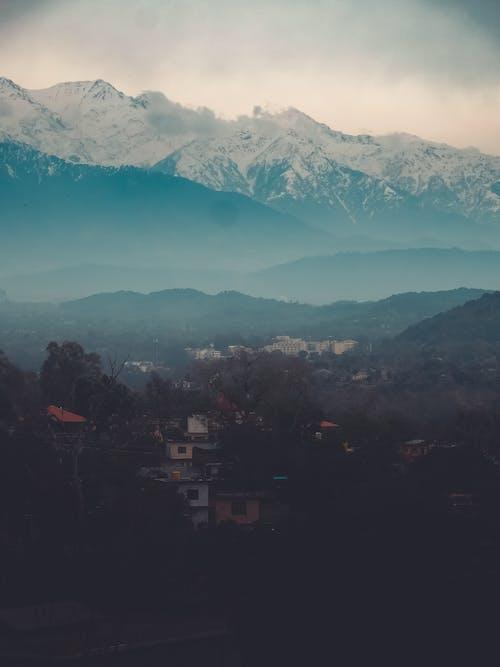 Photos gratuites de arbres, aube, bois, brouillard