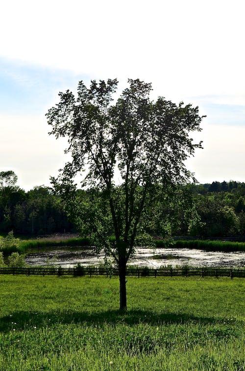 Бесплатное стоковое фото с lanscape, дерево, зеленая трава