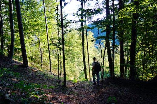 도보 여행자, 모험, 산 하이킹, 숲의 무료 스톡 사진