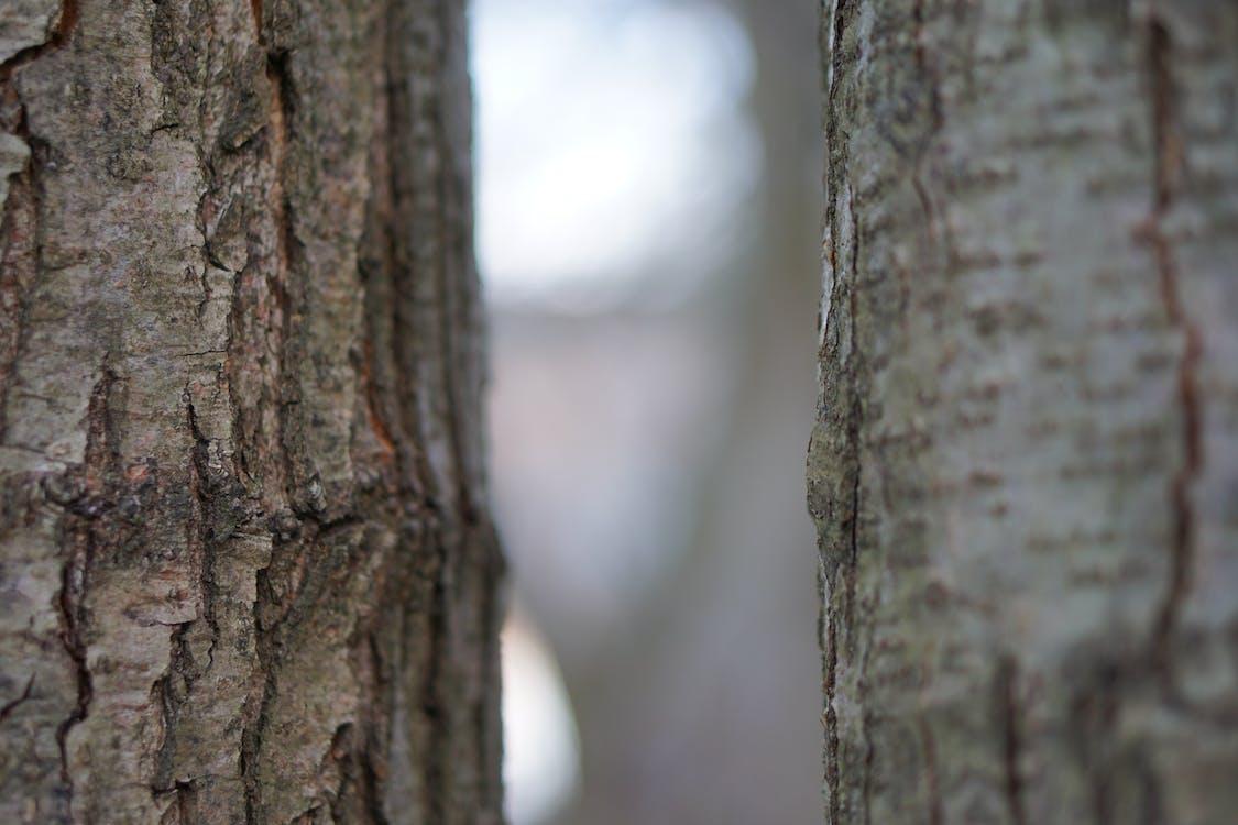 Бесплатное стоковое фото с два, дерево, деревья