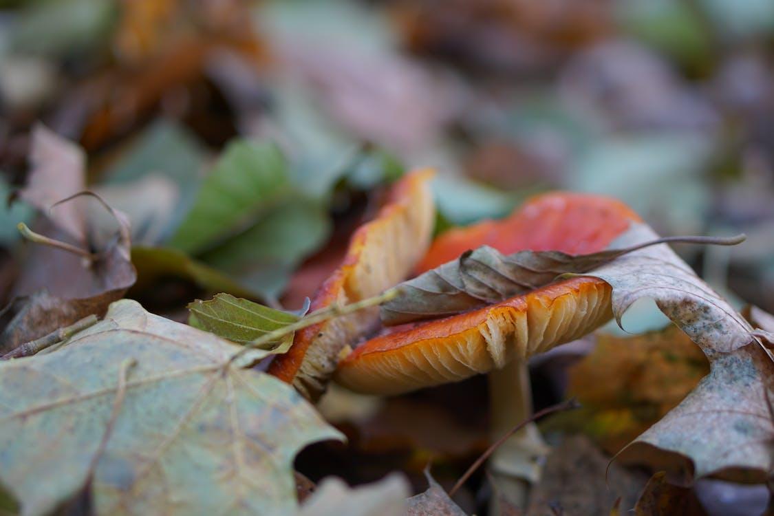Бесплатное стоковое фото с гриб, жизнь, красный