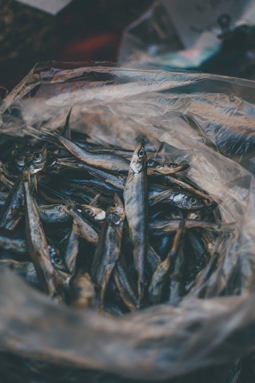 Mackerel Fish in Plastic Bag