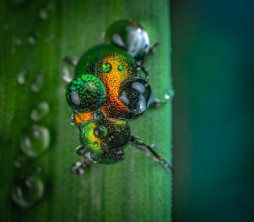 Fotobanka sbezplatnými fotkami na tému hmyz, kvapky vody, makro, šošovka