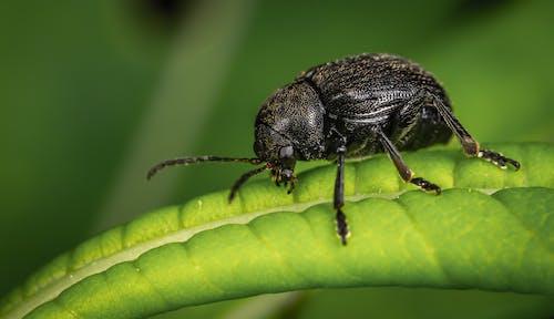 Black Insect On Leaf
