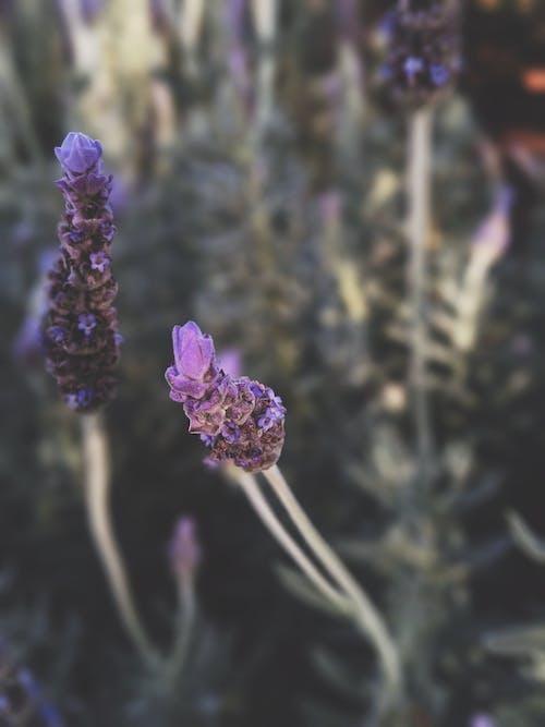 Bahçe, bitkibilim, çiçek, Çiçek açmak içeren Ücretsiz stok fotoğraf