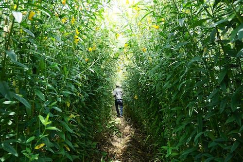 trailways, 人行道, 农学家, 危地马拉 的 免费素材照片