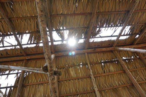 Imagine de stoc gratuită din abandonat, Chamaerops, fermă, lumină solară