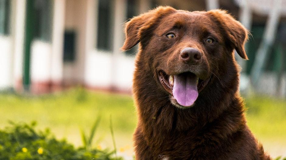 ¿Cómo sudan los perros?