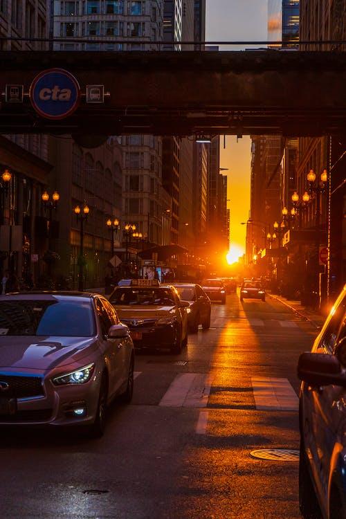 Foto profissional grátis de arquitetura, Chicago, folhagem de outono, luzes da cidade
