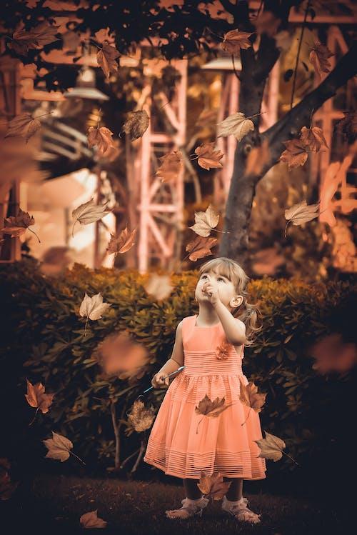 Fotobanka sbezplatnými fotkami na tému dieťa, dievča, jeseň, pohľad nahor