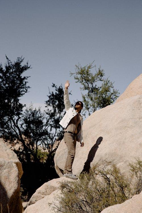 Fotos de stock gratuitas de al aire libre, árbol, ascender, aventura