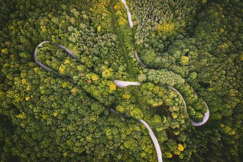 Ilmainen kuvapankkikuva tunnisteilla ilmakuva, lintuperspektiivi, metsä, puut