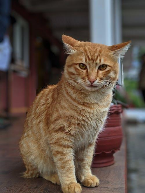 Δωρεάν στοκ φωτογραφιών με Γάτα, γάτες, γάτος