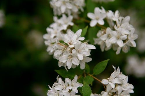 Photos gratuites de blanc, centrale, fleur