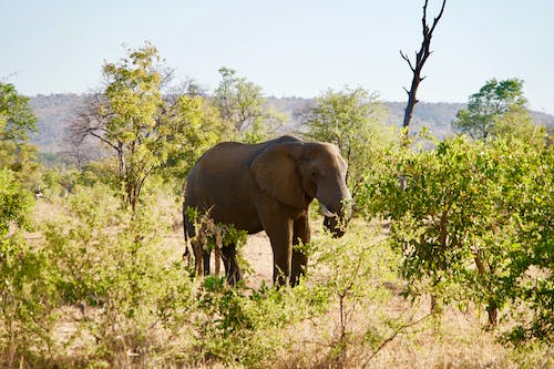 Brown Elephant Beside Trees