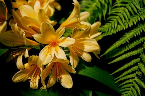 Photos gratuites de centrale, fleur, forêt tropicale, forêt tropicale humide