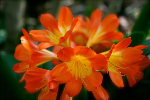 Photos gratuites de centrale, fleur, nature, orange