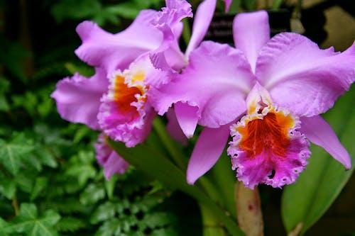 Photos gratuites de centrale, fleur, nature