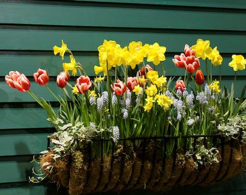 Photos gratuites de ferme, fleur, nature, pot de fleur