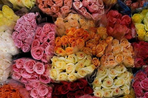 Photos gratuites de amour, amoureux, choix, couleurs